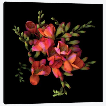 Freesia Orang VIII Canvas Print #MAG231} by Magda Indigo Art Print