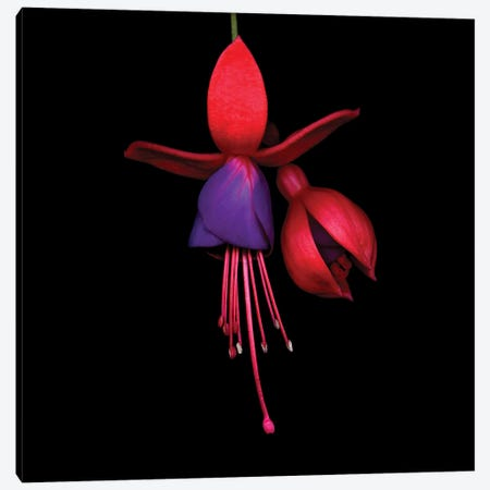 Fuchsia IIA 3-Piece Canvas #MAG236} by Magda Indigo Canvas Artwork