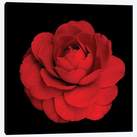 Gardenia Canvas Print #MAG241} by Magda Indigo Canvas Wall Art