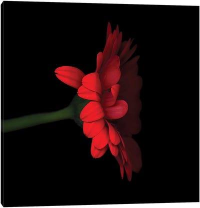 Gerbera Red V Canvas Art Print
