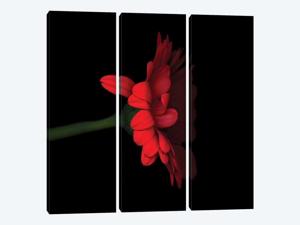 Gerbera Red V by Magda Indigo 3-piece Canvas Art Print