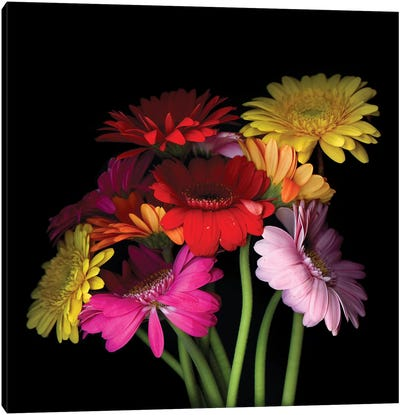 Gerbera I Canvas Art Print
