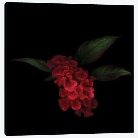 Hanekam I Canvas Print #MAG252} by Magda Indigo Canvas Print
