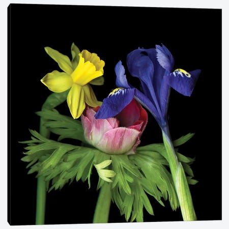 Iris Mini VII Canvas Print #MAG257} by Magda Indigo Canvas Artwork