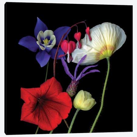 Mix I Canvas Print #MAG268} by Magda Indigo Canvas Artwork
