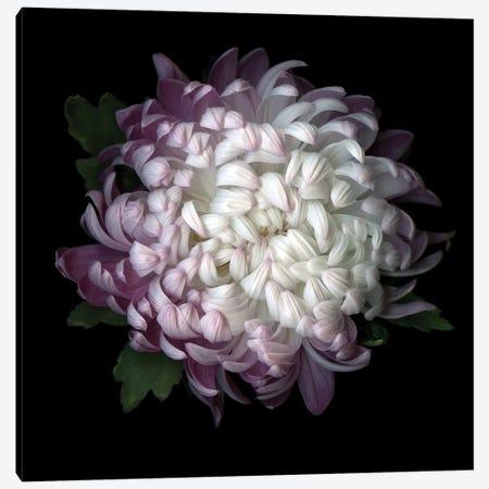 Mum Purple IV 3-Piece Canvas #MAG270} by Magda Indigo Canvas Art Print
