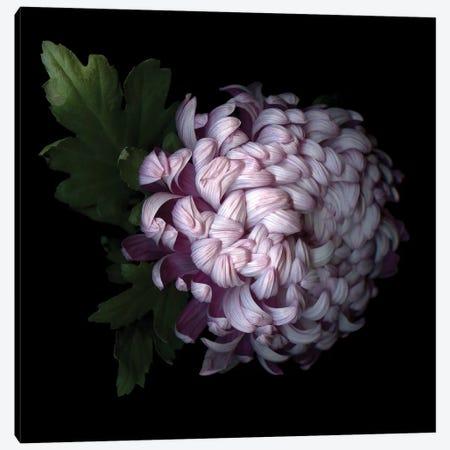 Mum Purple VI Canvas Print #MAG271} by Magda Indigo Art Print