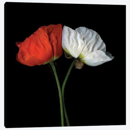 Poppies Mix VI Canvas Print #MAG291} by Magda Indigo Art Print
