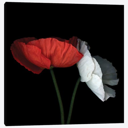 Poppy XXVIII Canvas Print #MAG293} by Magda Indigo Art Print