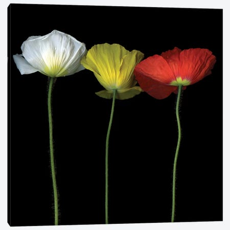Poppy VI Canvas Print #MAG294} by Magda Indigo Canvas Art
