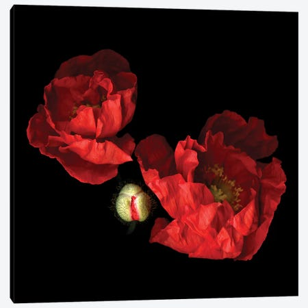 Poppy Red II Canvas Print #MAG295} by Magda Indigo Canvas Wall Art