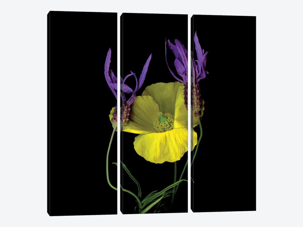 Poppy Yellow XVII by Magda Indigo 3-piece Canvas Artwork
