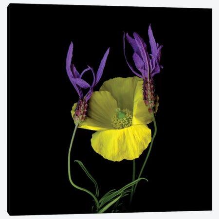Poppy Yellow XVII Canvas Print #MAG296} by Magda Indigo Canvas Wall Art