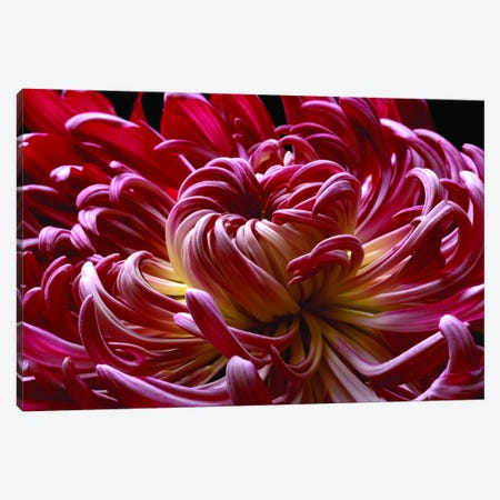 Enticing Mum Canvas Print #MAG29} by Magda Indigo Canvas Wall Art