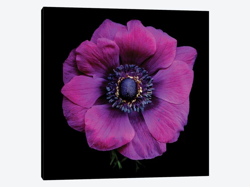 Purple Anemones Heart V by Magda Indigo 1-piece Canvas Art