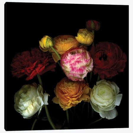 Ranunculus XXXV 3-Piece Canvas #MAG305} by Magda Indigo Canvas Artwork