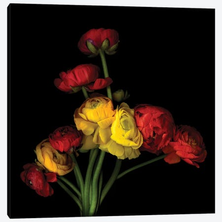 Ranunculus LVI 3-Piece Canvas #MAG308} by Magda Indigo Canvas Print