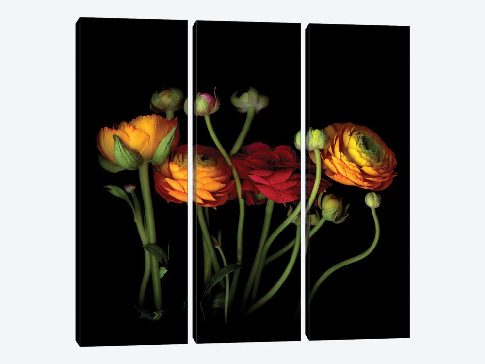 Ranunculus IV by Magda Indigo 3-piece Canvas Print