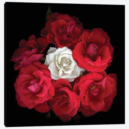 Rose Mix XI Canvas Print #MAG323} by Magda Indigo Art Print