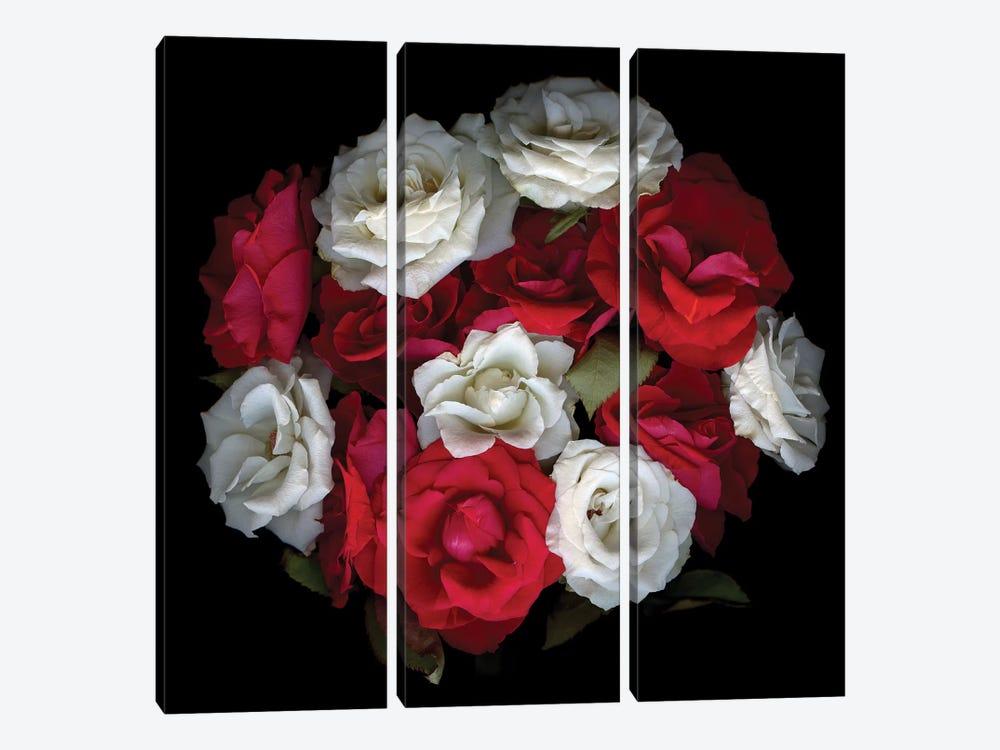 Rose Mix XIII by Magda Indigo 3-piece Art Print
