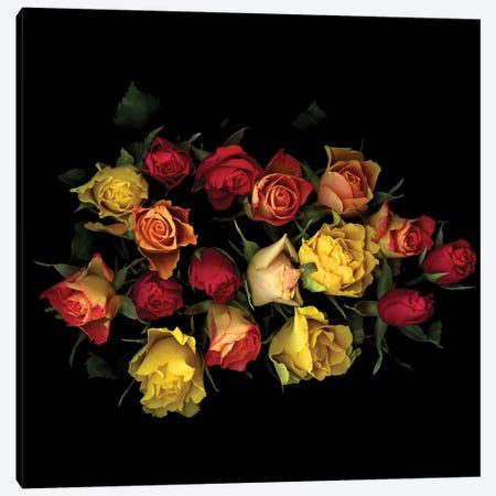 Rose Mix II Canvas Print #MAG326} by Magda Indigo Canvas Wall Art