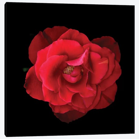 Rose Mix V Canvas Print #MAG327} by Magda Indigo Canvas Wall Art