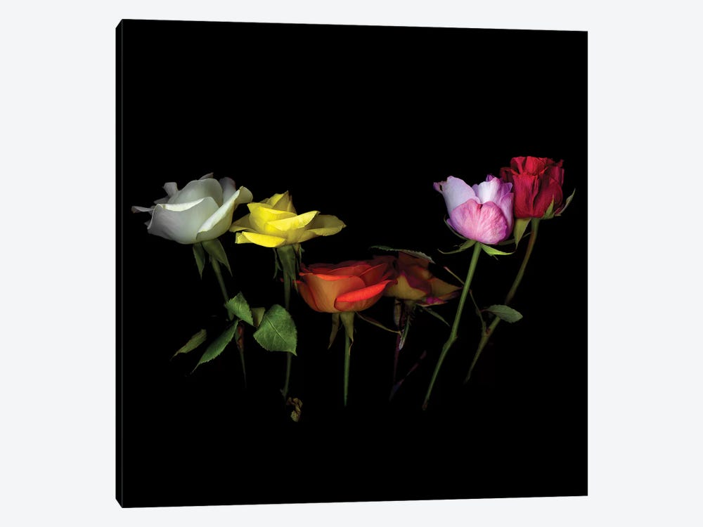 Roses Mix X by Magda Indigo 1-piece Canvas Art