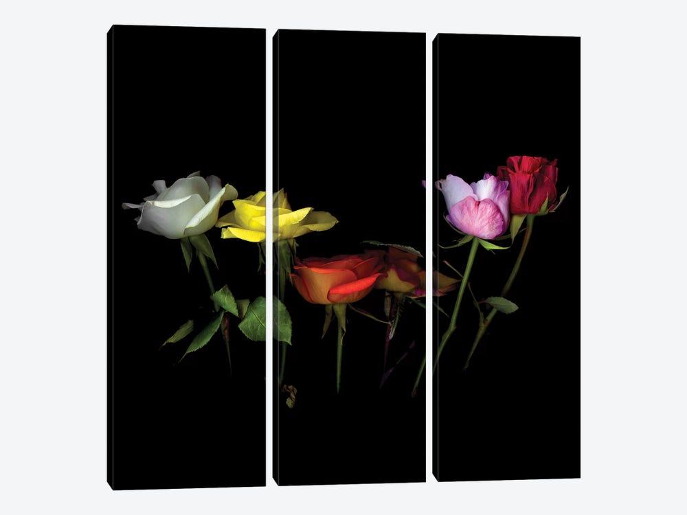 Roses Mix X by Magda Indigo 3-piece Canvas Artwork