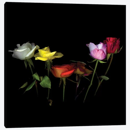 Roses Mix X Canvas Print #MAG333} by Magda Indigo Canvas Artwork