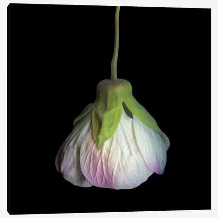 Solanum VI Canvas Print #MAG337} by Magda Indigo Canvas Print