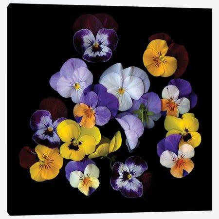 Spring Violet XXIV Canvas Print #MAG338} by Magda Indigo Canvas Artwork