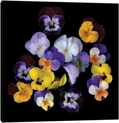 Spring Violet XXIV Canvas Art Print