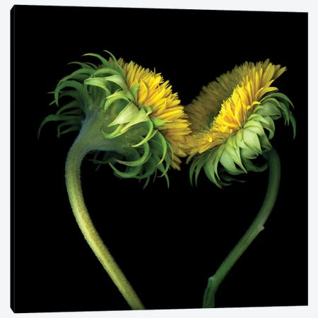 Sunflower X Canvas Print #MAG339} by Magda Indigo Canvas Wall Art