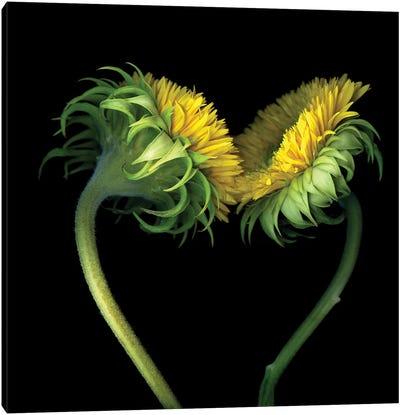 Sunflower X Canvas Art Print
