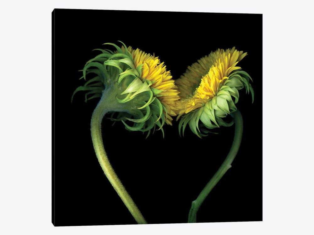 Sunflower X by Magda Indigo 1-piece Canvas Artwork