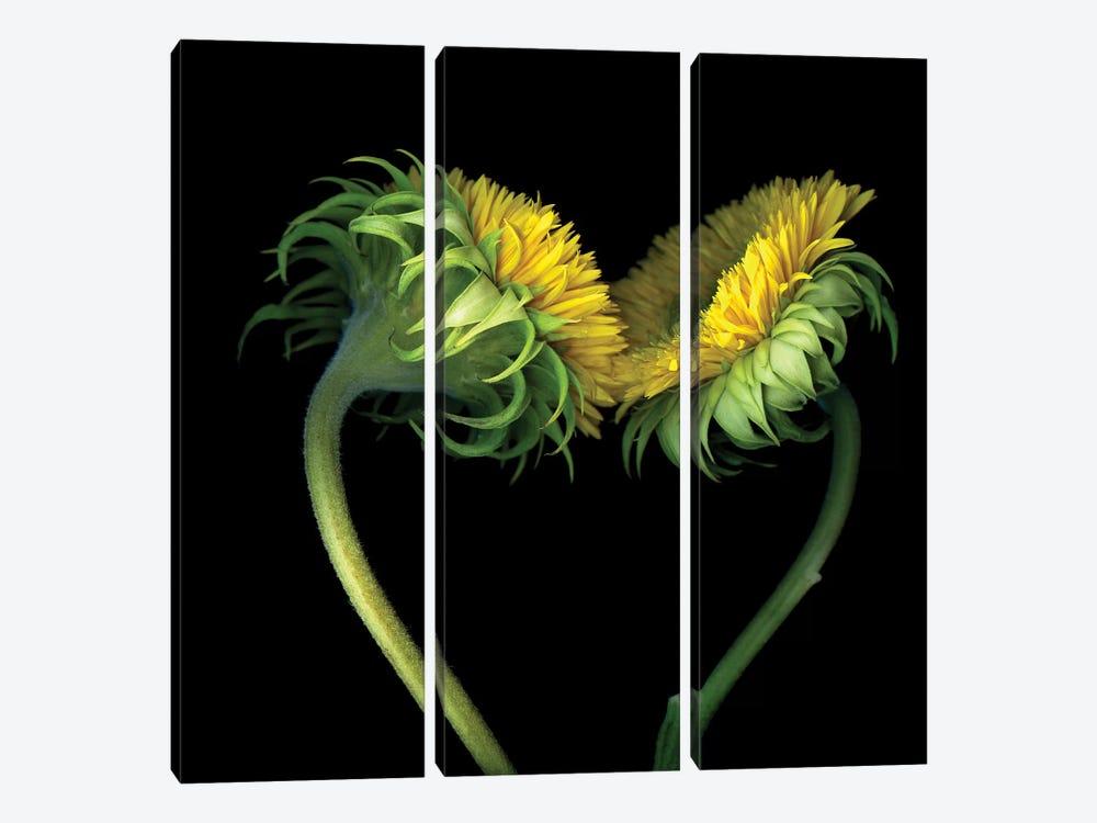 Sunflower X by Magda Indigo 3-piece Canvas Artwork