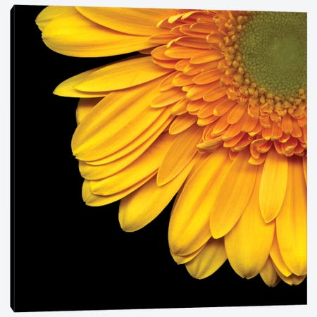 Golden Rays Canvas Print #MAG33} by Magda Indigo Canvas Art Print