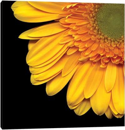Golden Rays Canvas Art Print