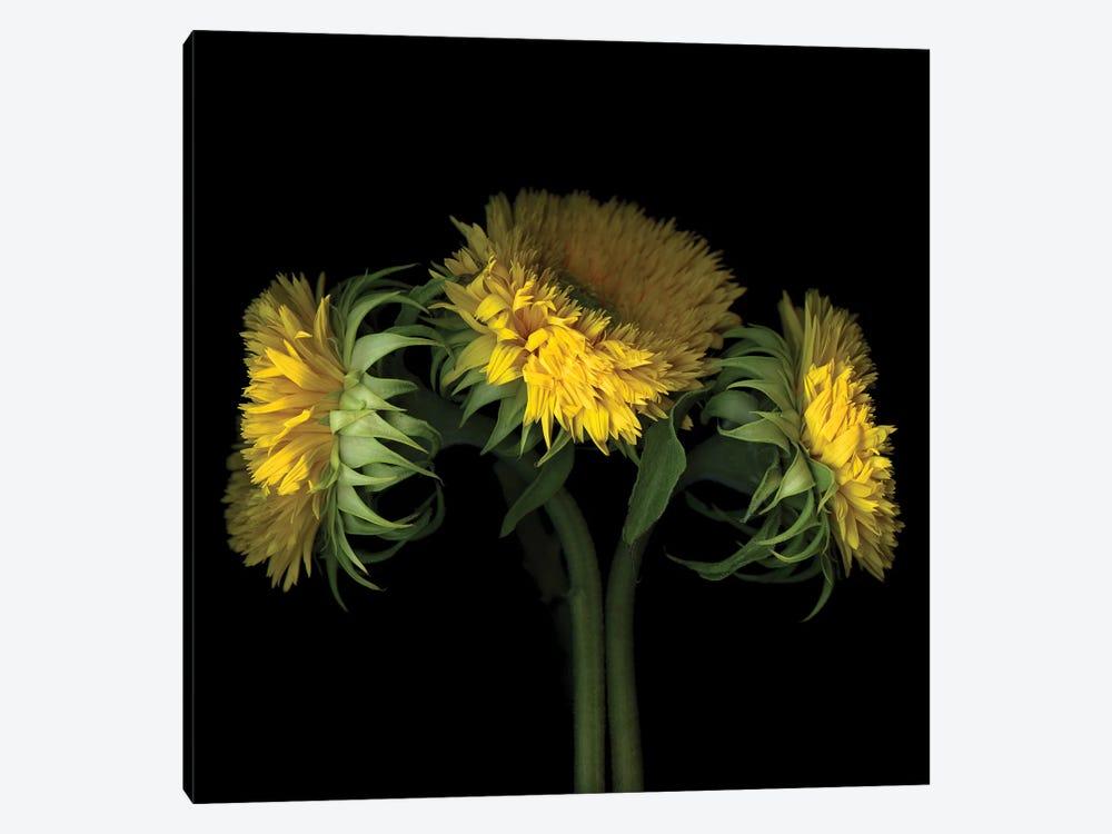 Sunflower VIII by Magda Indigo 1-piece Canvas Art