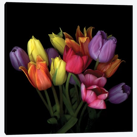 Tulip Flame X Canvas Print #MAG348} by Magda Indigo Art Print