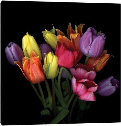 Tulip Flame X Canvas Art Print