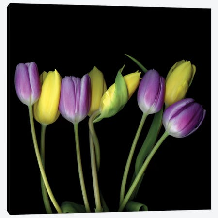 Tulip Flame VI Canvas Print #MAG349} by Magda Indigo Canvas Art Print