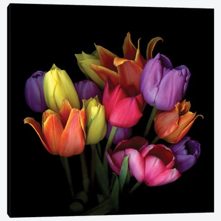 Tulip Flame IX Canvas Print #MAG350} by Magda Indigo Canvas Wall Art