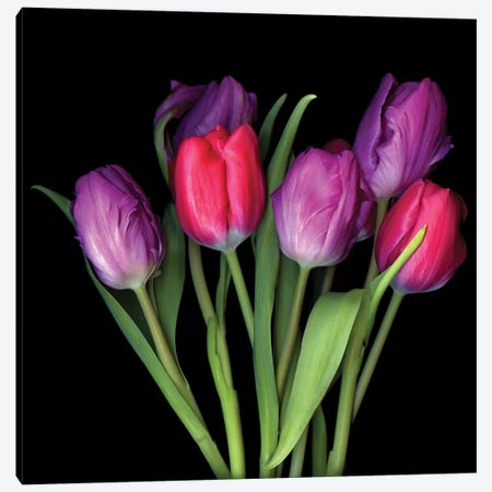 Tulip Purple XIII Canvas Print #MAG361} by Magda Indigo Art Print