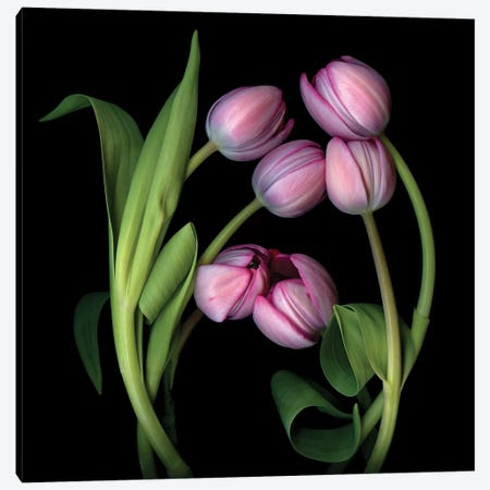 Tulip Special X Canvas Print #MAG363} by Magda Indigo Canvas Art Print