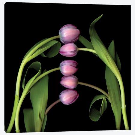 Tulip Special II 3-Piece Canvas #MAG364} by Magda Indigo Canvas Artwork
