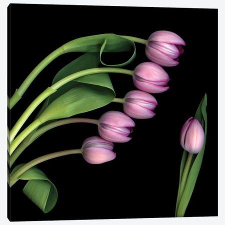 Tulip Special IV Canvas Print #MAG365} by Magda Indigo Canvas Art