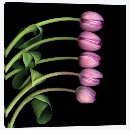 Tulip Special V Canvas Print #MAG366} by Magda Indigo Canvas Wall Art
