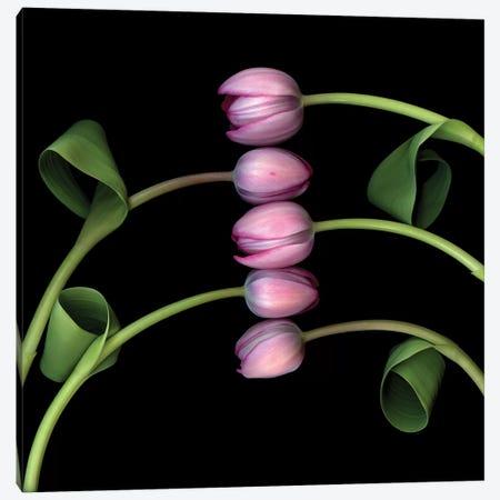 Tulip Special VI Canvas Print #MAG367} by Magda Indigo Canvas Art
