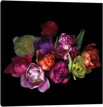 Tulips Mix XI Canvas Art Print